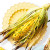 corn_cob_recipes