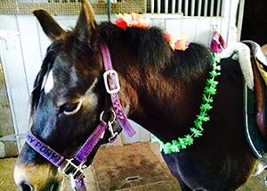 lei_pony