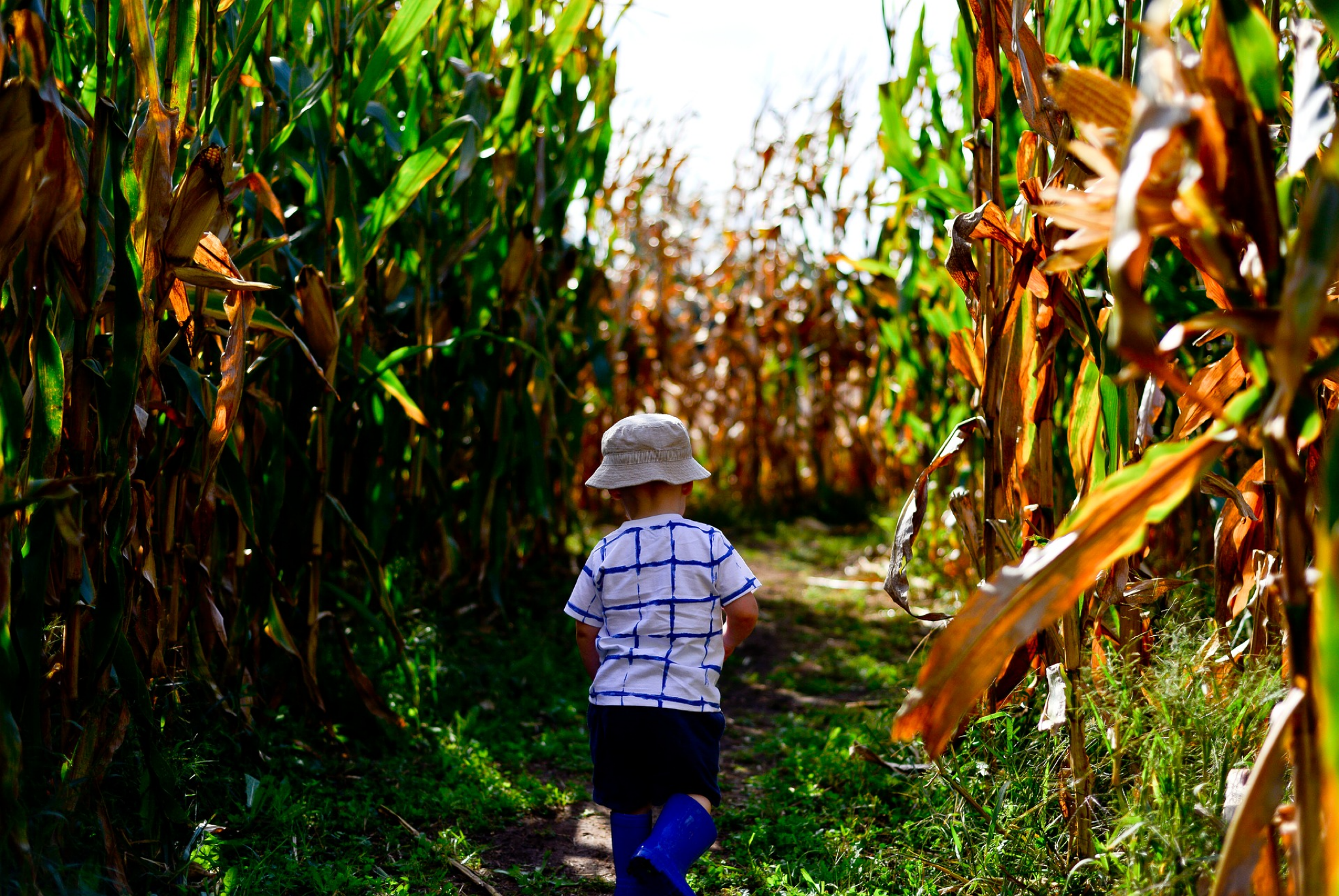 Fall in Maine isn't complete without a corn maze